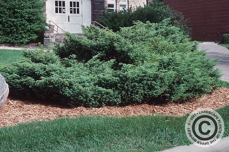 Landscape Plants Of The Upper Midwest Home
